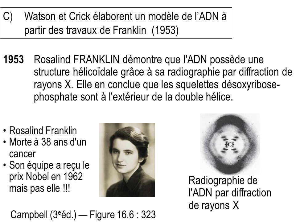 C)Watson et Crick élaborent un modèle de lADN à partir des travaux de Franklin (1953) 1953 Rosalind FRANKLIN démontre que l'ADN possède une structure