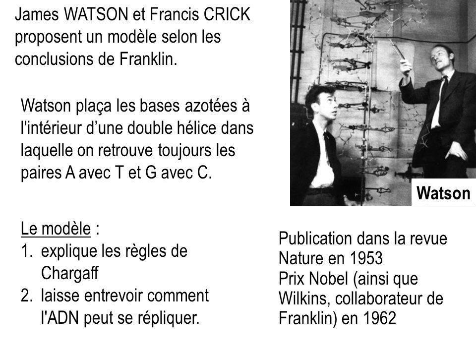 Watson James WATSON et Francis CRICK proposent un modèle selon les conclusions de Franklin. Le modèle : 1.explique les règles de Chargaff 2.laisse ent