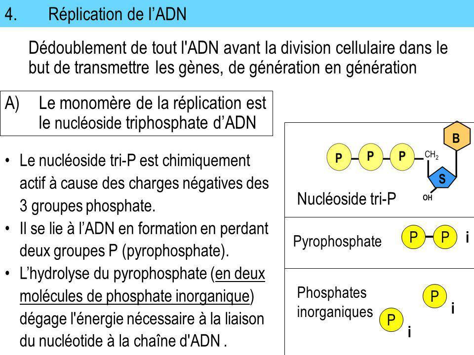 4. Réplication de lADN Dédoublement de tout l'ADN avant la division cellulaire dans le but de transmettre les gènes, de génération en génération Le nu