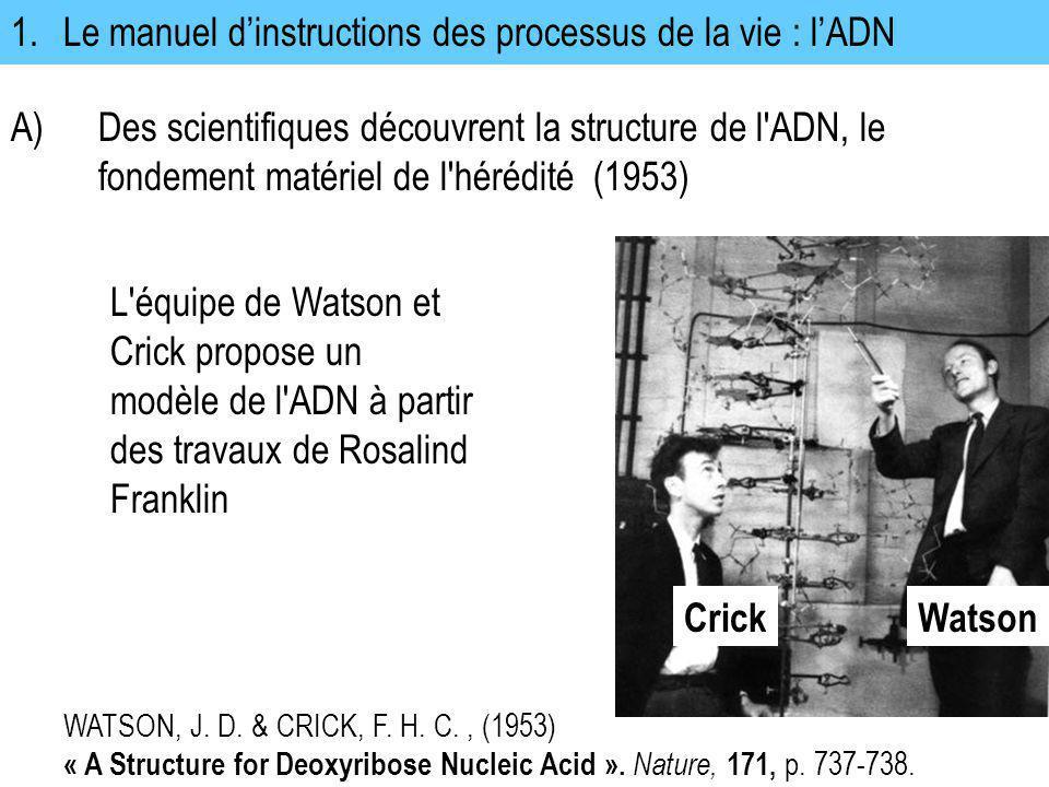 1.Le manuel dinstructions des processus de la vie : lADN A)Des scientifiques découvrent la structure de l'ADN, le fondement matériel de l'hérédité (19