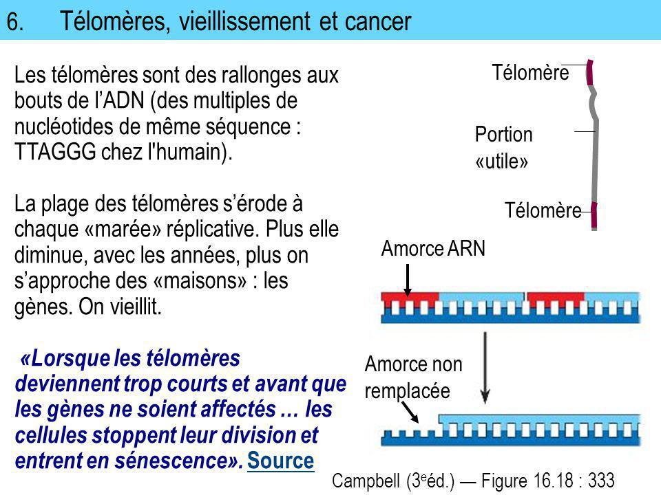 6. Télomères, vieillissement et cancer Les télomères sont des rallonges aux bouts de lADN (des multiples de nucléotides de même séquence : TTAGGG chez