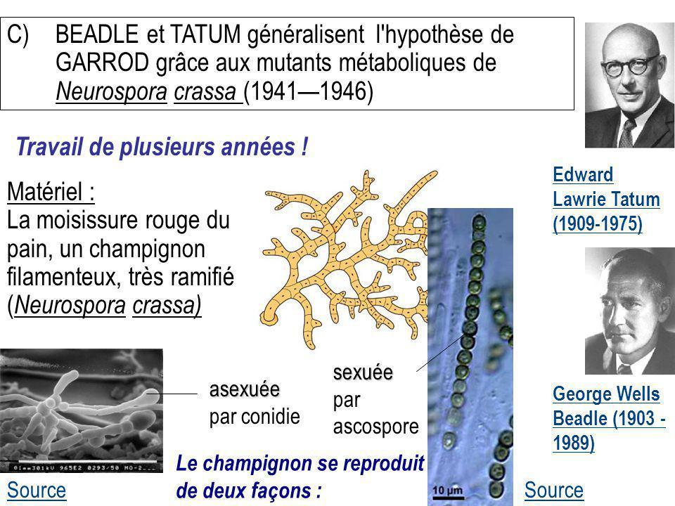 Edward Lawrie Tatum (1909-1975) C)BEADLE et TATUM généralisent l'hypothèse de GARROD grâce aux mutants métaboliques de Neurospora crassa (19411946) So