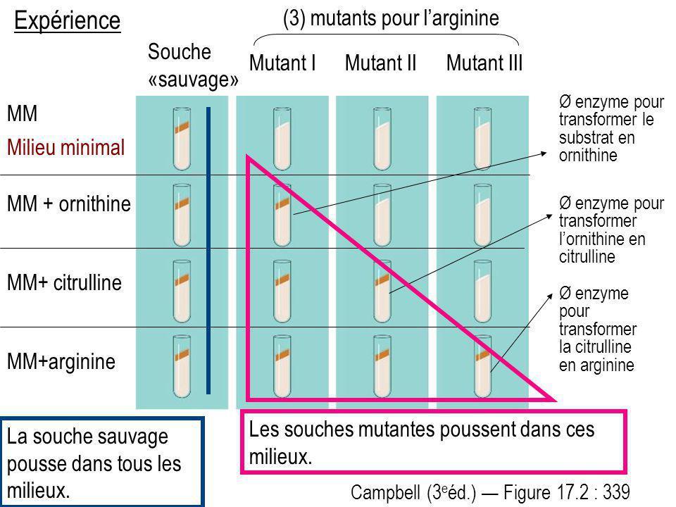 Campbell (3 e éd.) Figure 17.2 : 339 Expérience Souche «sauvage» Mutant IMutant IIMutant III MM Milieu minimal MM + ornithine MM+ citrulline MM+argini