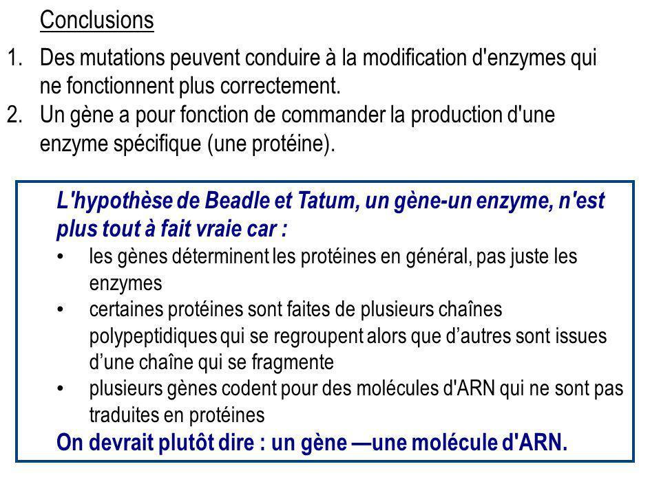1.Des mutations peuvent conduire à la modification d'enzymes qui ne fonctionnent plus correctement. 2.Un gène a pour fonction de commander la producti