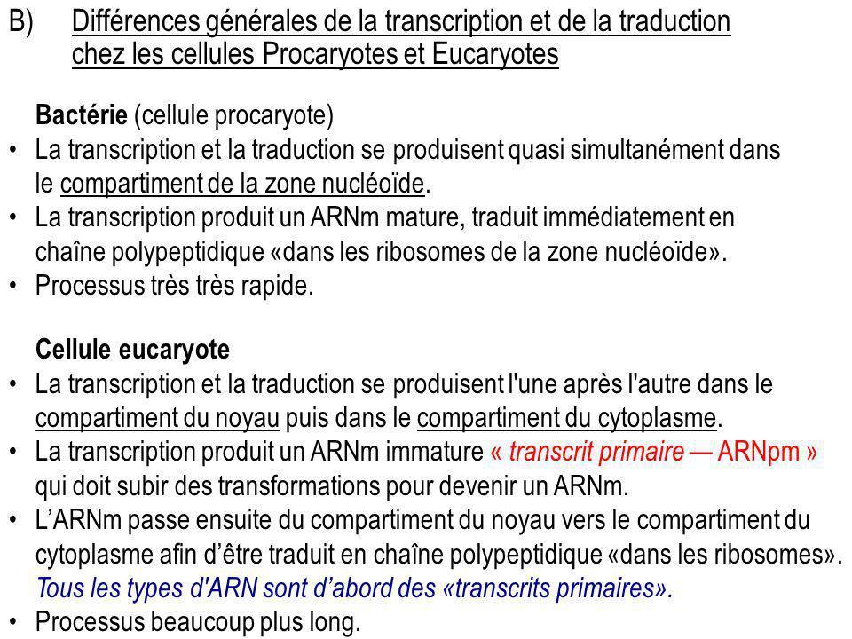 B)Différences générales de la transcription et de la traduction chez les cellules Procaryotes et Eucaryotes Bactérie (cellule procaryote) La transcrip