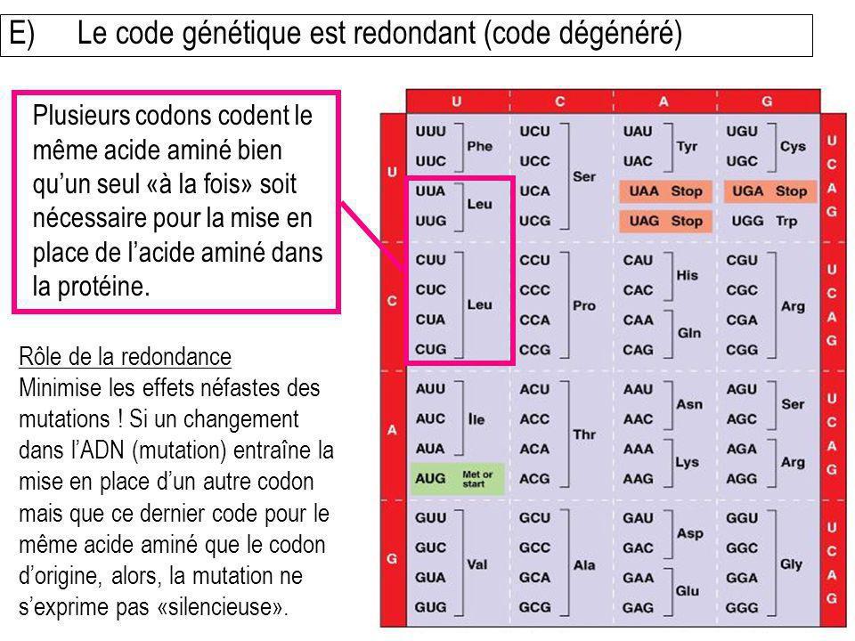 Rôle de la redondance Minimise les effets néfastes des mutations ! Si un changement dans lADN (mutation) entraîne la mise en place dun autre codon mai
