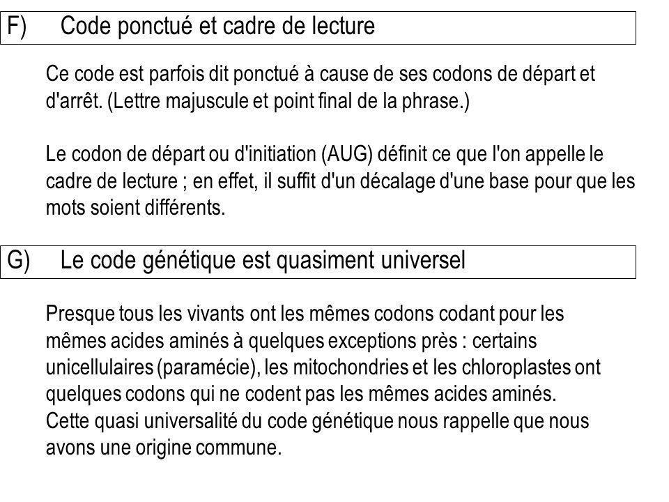F) Code ponctué et cadre de lecture Ce code est parfois dit ponctué à cause de ses codons de départ et d'arrêt. (Lettre majuscule et point final de la