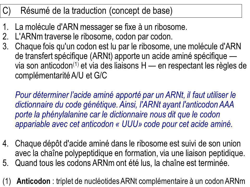 C)Résumé de la traduction (concept de base) 1.La molécule d'ARN messager se fixe à un ribosome. 2.L'ARNm traverse le ribosome, codon par codon. 3.Chaq