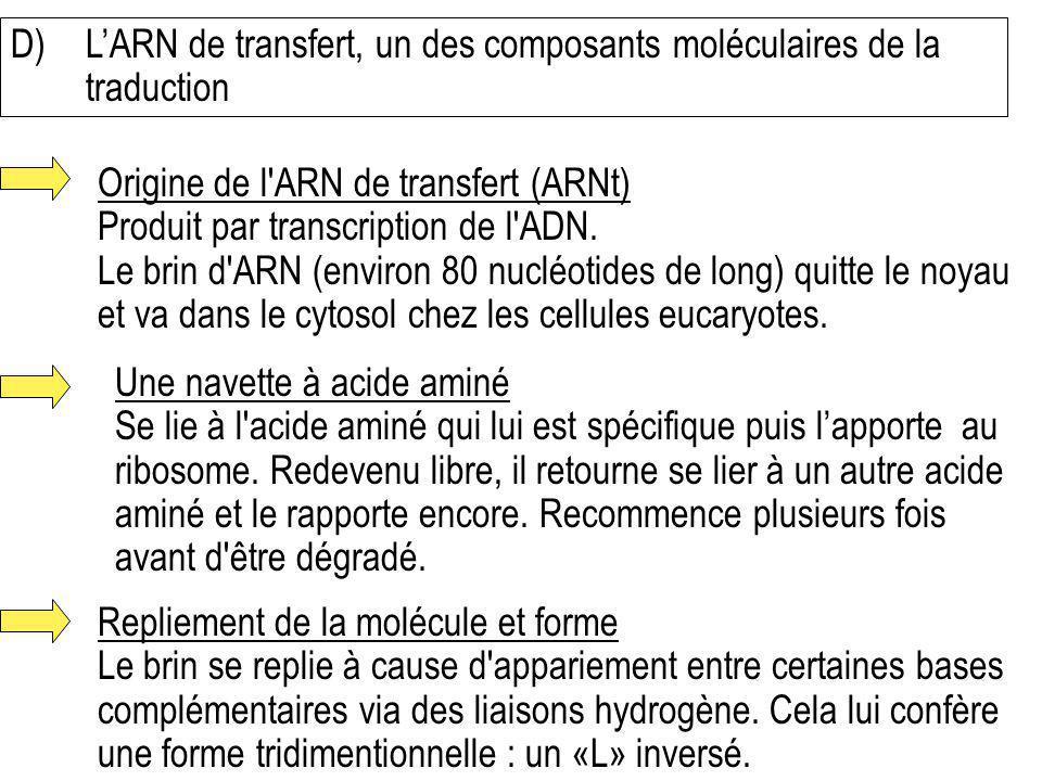D)LARN de transfert, un des composants moléculaires de la traduction Origine de l'ARN de transfert (ARNt) Produit par transcription de l'ADN. Le brin