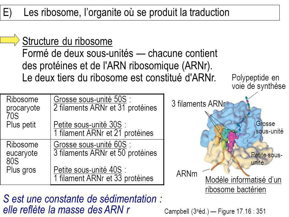 E)Les ribosome, lorganite où se produit la traduction Structure du ribosome Formé de deux sous-unités chacune contient des protéines et de l'ARN ribos