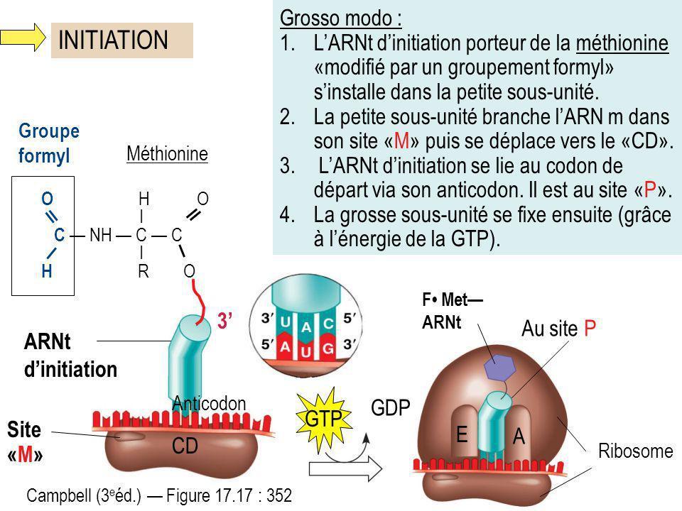 INITIATION 3 O H O I C NH C C I H R O Groupe formyl Site «M» Méthionine Grosso modo : 1.LARNt dinitiation porteur de la méthionine «modifié par un gro