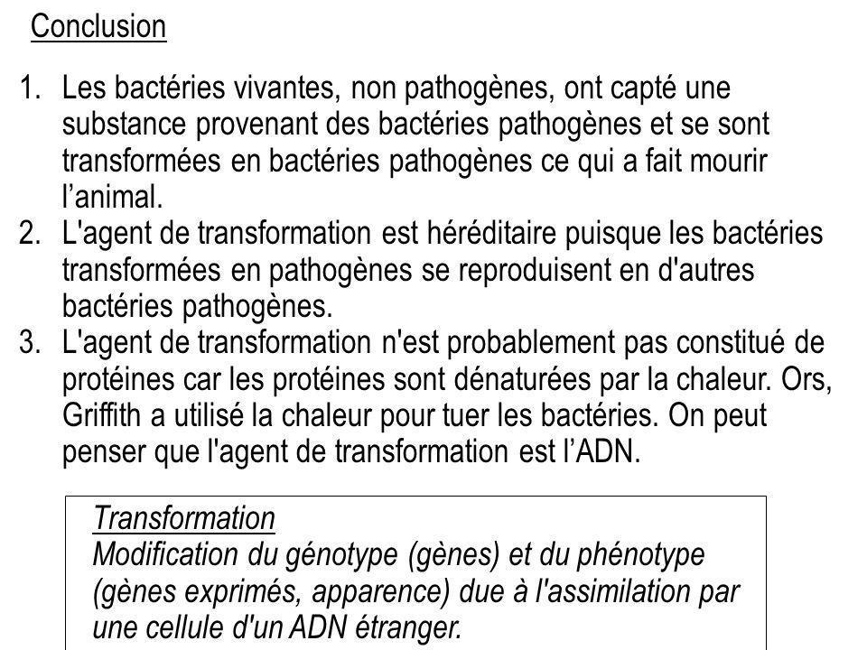 1.Les bactéries vivantes, non pathogènes, ont capté une substance provenant des bactéries pathogènes et se sont transformées en bactéries pathogènes c