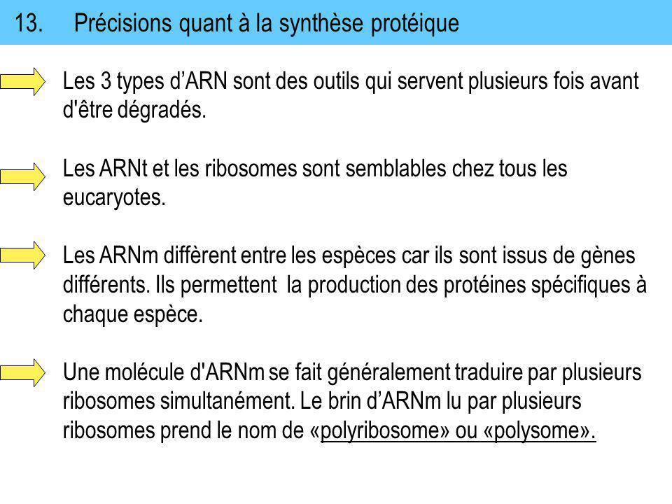 13.Précisions quant à la synthèse protéique Les 3 types dARN sont des outils qui servent plusieurs fois avant d'être dégradés. Les ARNt et les ribosom