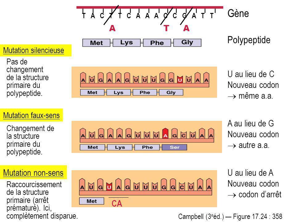 Campbell (3 e éd.) Figure 17.24 : 358 I I I I I I I I I I I I I I I T A C T T C A A A C C G A T T Polypeptide Gène Mutation silencieuse U au lieu de C