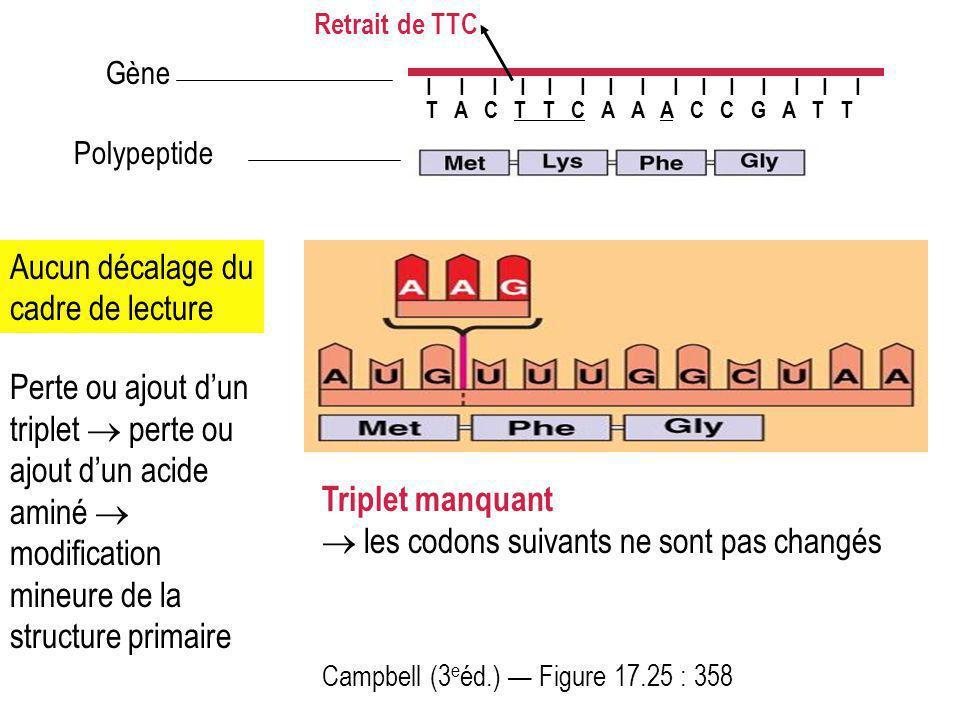 Campbell (3 e éd.) Figure 17.25 : 358 Aucun décalage du cadre de lecture Perte ou ajout dun triplet perte ou ajout dun acide aminé modification mineur