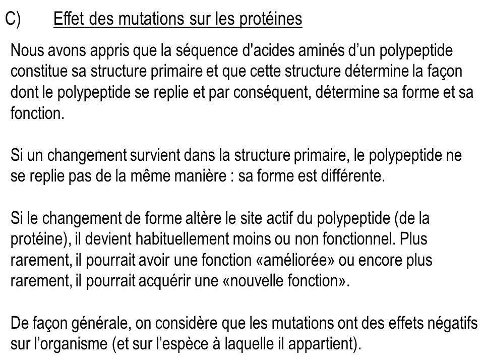 C)Effet des mutations sur les protéines Nous avons appris que la séquence d'acides aminés dun polypeptide constitue sa structure primaire et que cette
