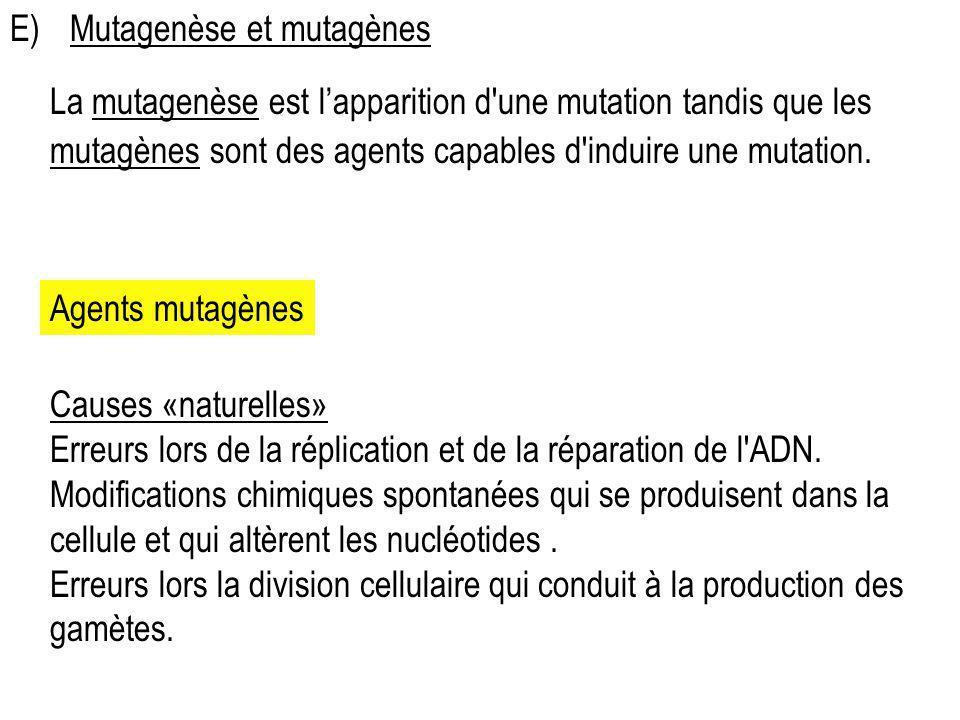 E)Mutagenèse et mutagènes La mutagenèse est lapparition d'une mutation tandis que les mutagènes sont des agents capables d'induire une mutation. Agent