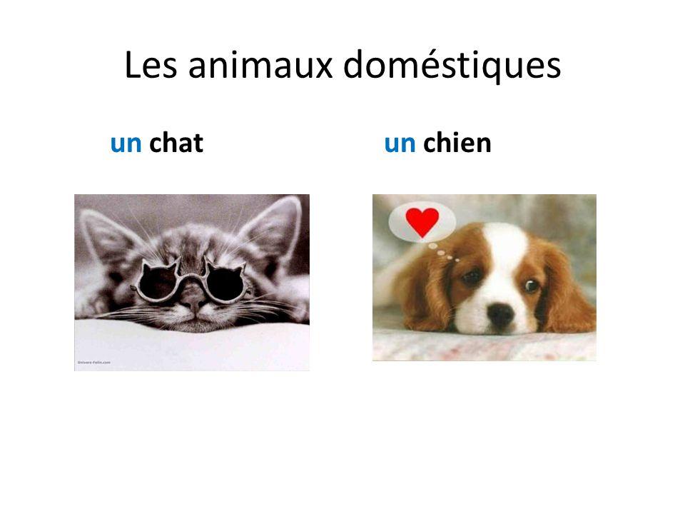 Les animaux doméstiques un chatun chien