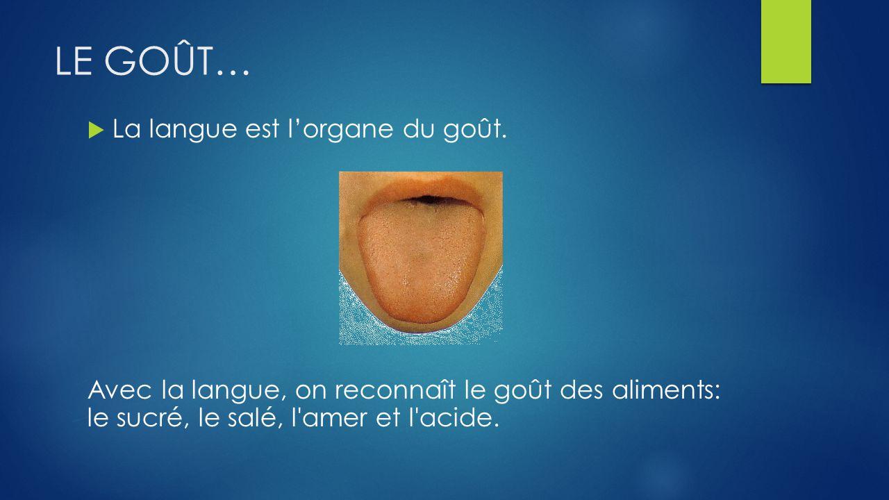 LE GOÛT… La langue est lorgane du goût.