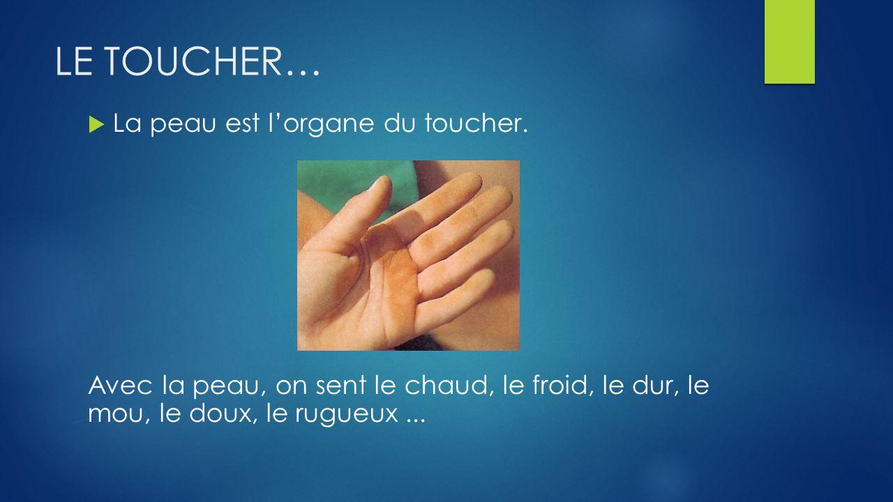 LE TOUCHER… La peau est lorgane du toucher.