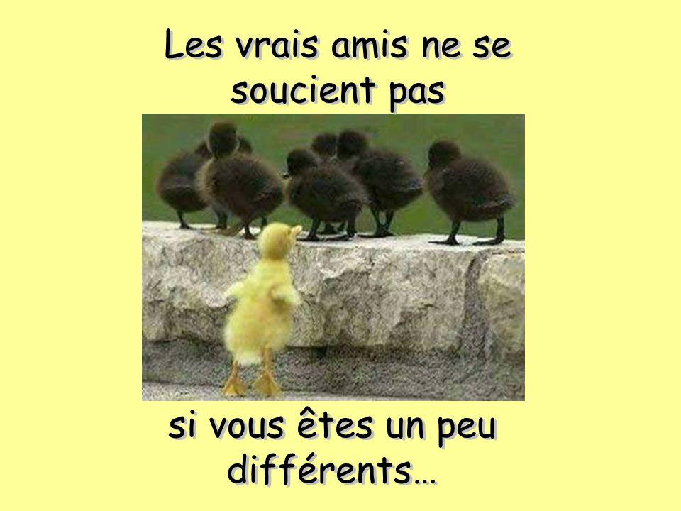 Les vrais amis ne se soucient pas si vous êtes un peu différents… si vous êtes un peu différents…