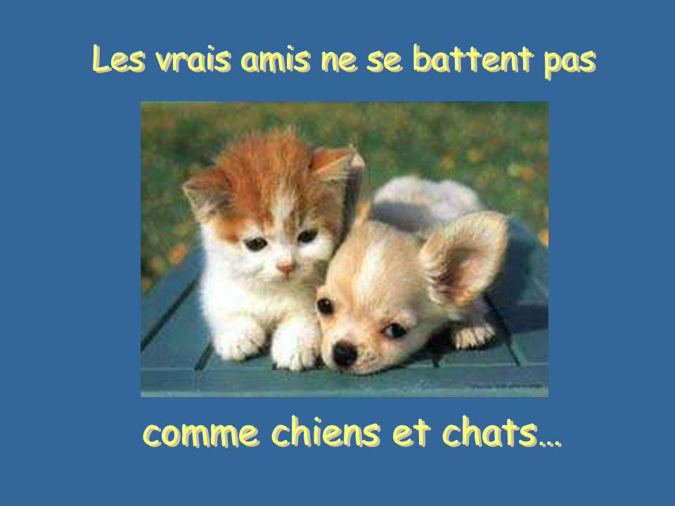 Les vrais amis ne se battent pas comme chiens et chats… comme chiens et chats…