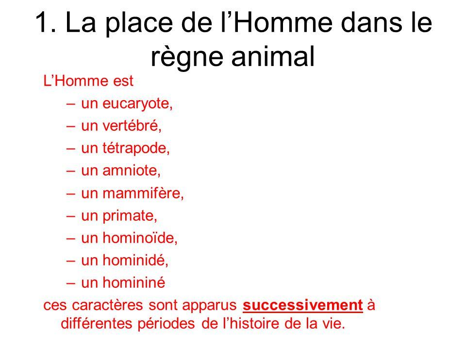 1. La place de lHomme dans le règne animal LHomme est –un eucaryote, –un vertébré, –un tétrapode, –un amniote, –un mammifère, –un primate, –un hominoï