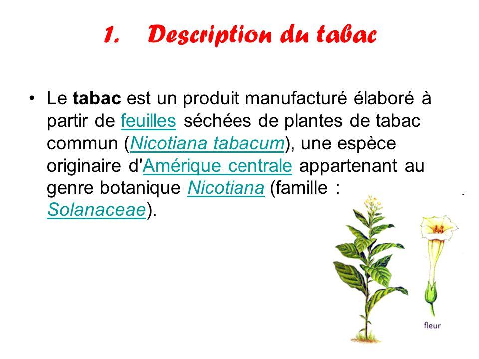 1.Description du tabac Le tabac est un produit manufacturé élaboré à partir de feuilles séchées de plantes de tabac commun (Nicotiana tabacum), une es