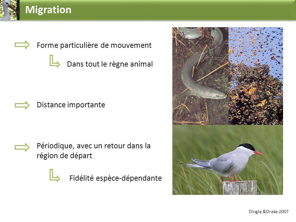 Migration Forme particulière de mouvement Dans tout le règne animal Distance importante Périodique, avec un retour dans la région de départ Dingle &Dr