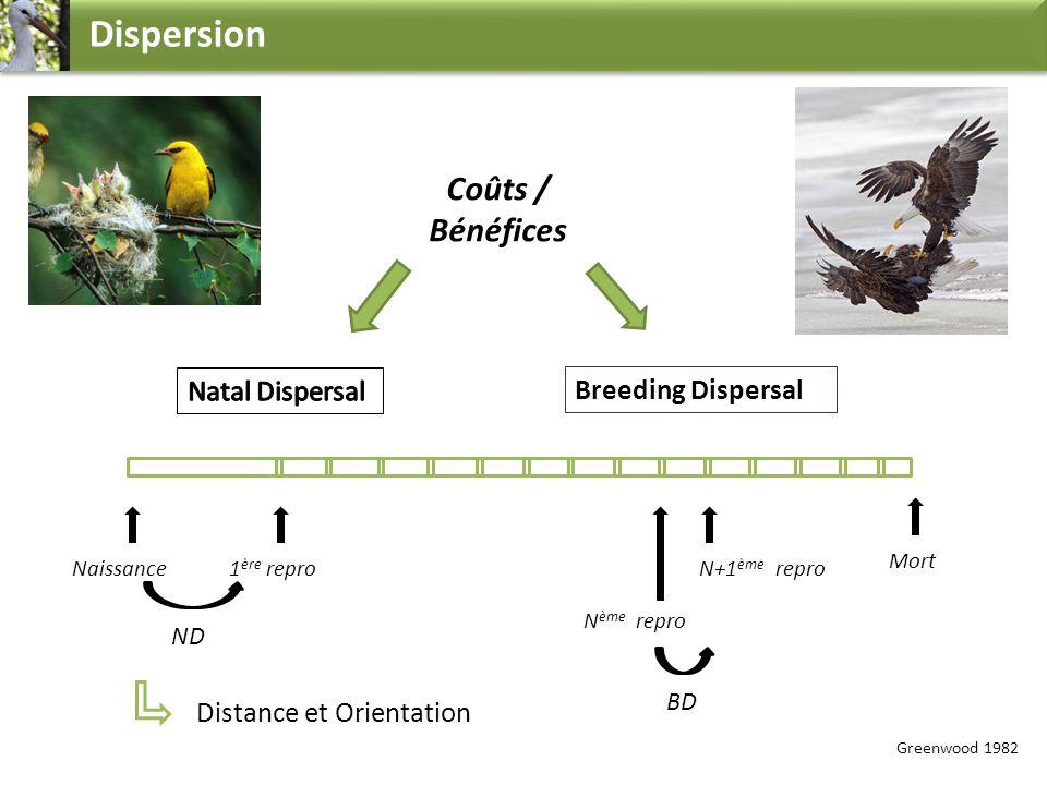 Dispersion Coûts / Bénéfices Breeding Dispersal Naissance1 ère repro N ème repro N+1 ème repro Distance et Orientation Greenwood 1982 Mort ND BD