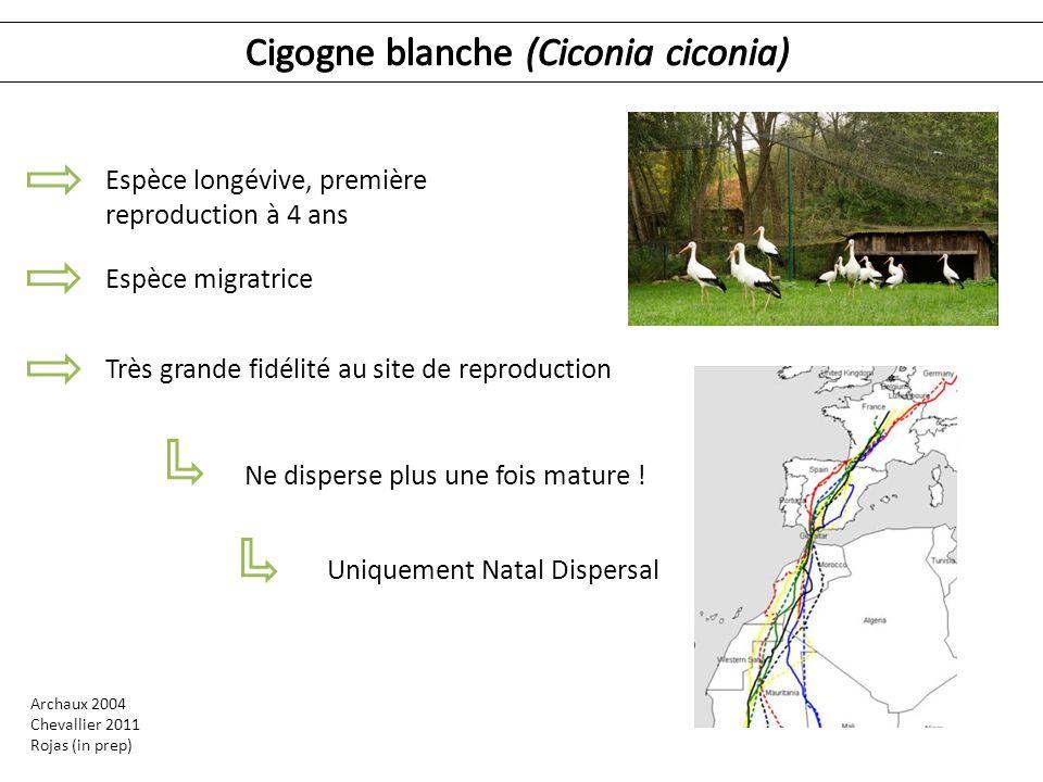 Archaux 2004 Chevallier 2011 Rojas (in prep) Espèce longévive, première reproduction à 4 ans Espèce migratrice Très grande fidélité au site de reprodu