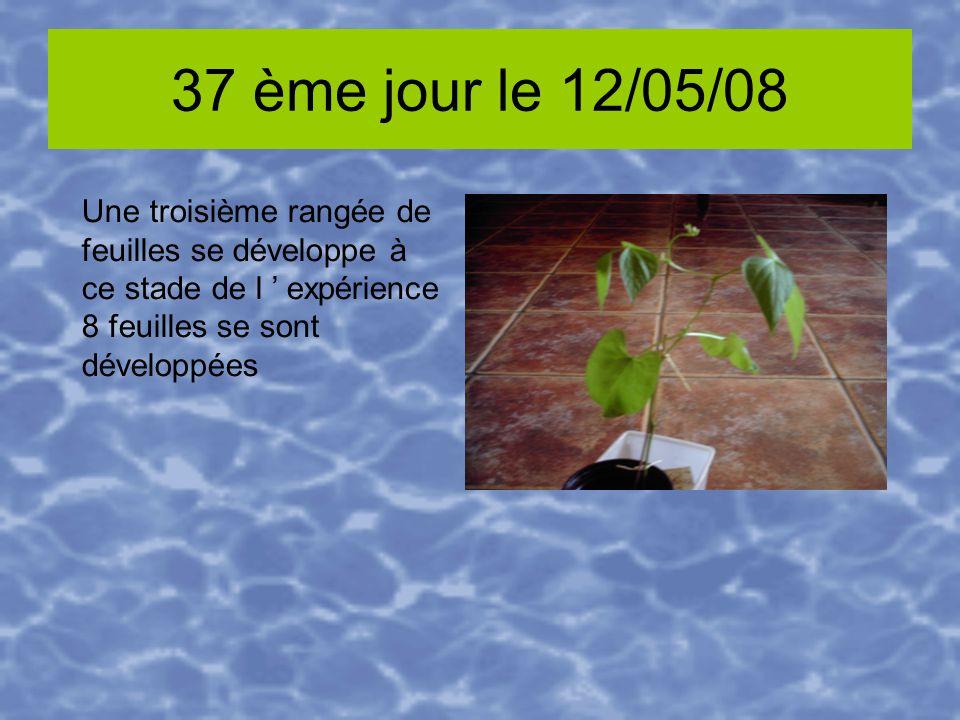 37 ème jour le 12/05/08 Une troisième rangée de feuilles se développe à ce stade de l expérience 8 feuilles se sont développées