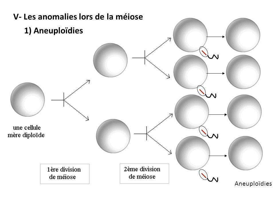 Aneuploïdies V- Les anomalies lors de la méiose 1) Aneuploïdies