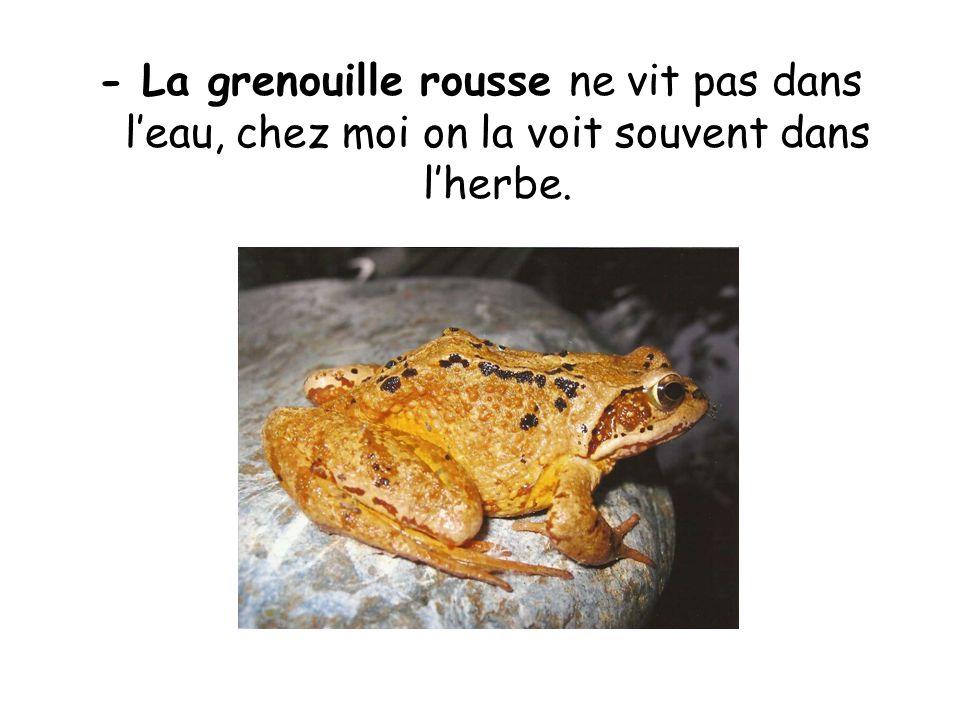 - La grenouille rousse ne vit pas dans leau, chez moi on la voit souvent dans lherbe.