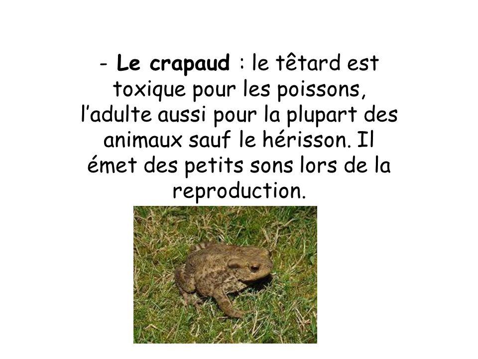 - Le crapaud : le têtard est toxique pour les poissons, ladulte aussi pour la plupart des animaux sauf le hérisson.