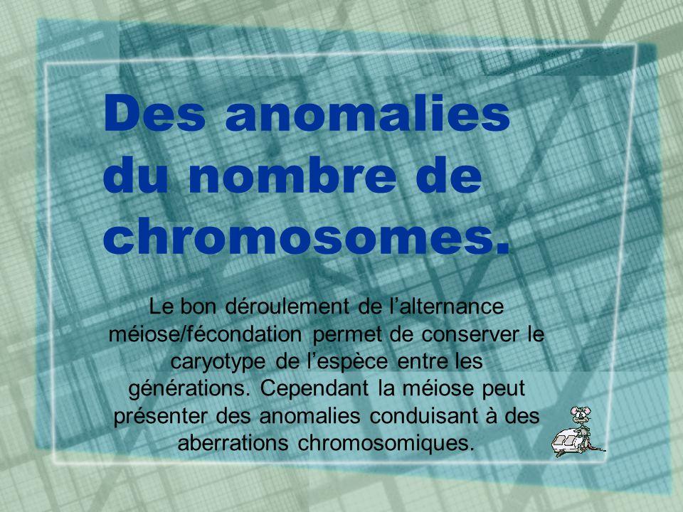 Des anomalies du nombre de chromosomes. Le bon déroulement de lalternance méiose/fécondation permet de conserver le caryotype de lespèce entre les gén