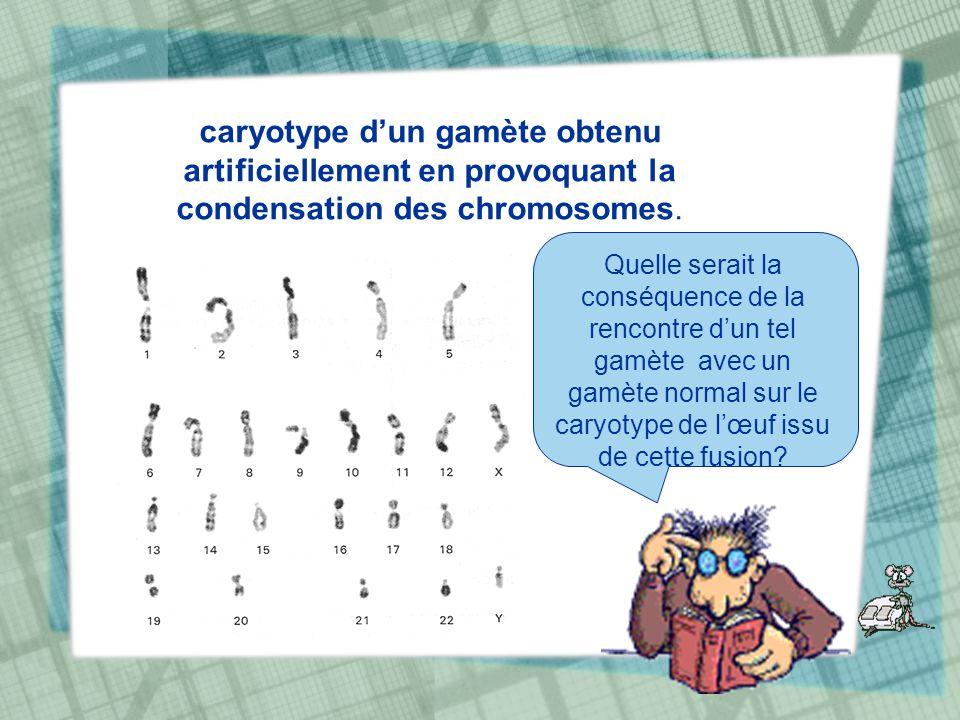 caryotype dun gamète obtenu artificiellement en provoquant la condensation des chromosomes. Quelle serait la conséquence de la rencontre dun tel gamèt