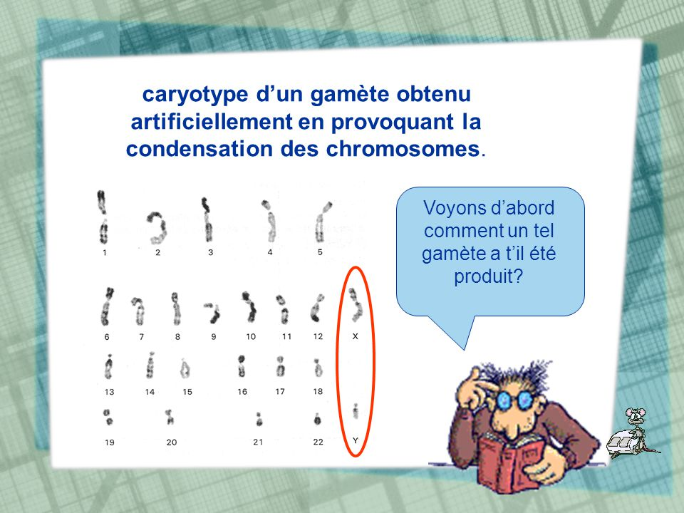 caryotype dun gamète obtenu artificiellement en provoquant la condensation des chromosomes. Voyons dabord comment un tel gamète a til été produit?