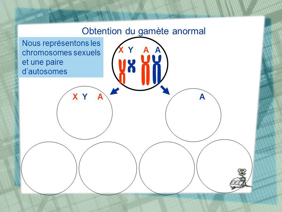 Obtention du gamète anormal X Y A A Nous représentons les chromosomes sexuels et une paire dautosomes X Y AA