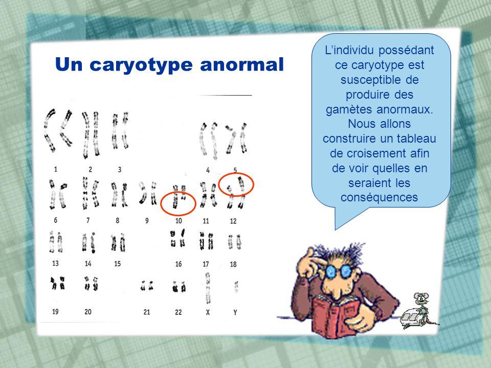 Un caryotype anormal Lindividu possédant ce caryotype est susceptible de produire des gamètes anormaux. Nous allons construire un tableau de croisemen