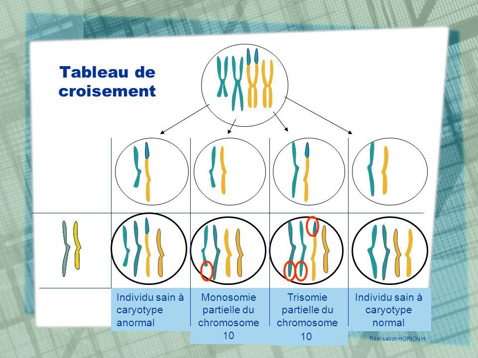 Individu sain à caryotype anormal Monosomie partielle du chromosome 10 Trisomie partielle du chromosome 10 Individu sain à caryotype normal Réalisatio