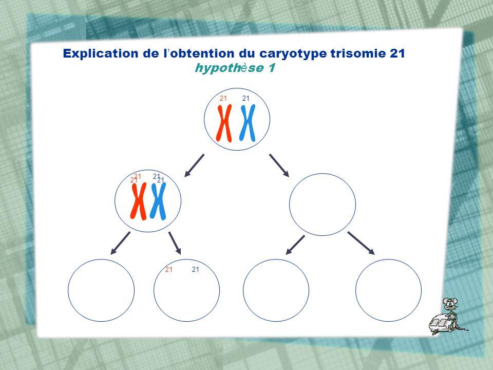 Explication de l obtention du caryotype trisomie 21 hypoth è se 1 21