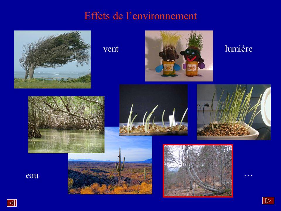 Réponse(s) à des environnements similaires Euphorbe amygdaloïdes Euphorbe corse Euphorbe candélabre Cactus de Bolivie