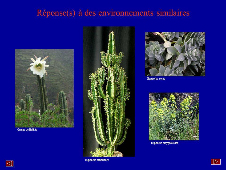 Synthèse La morphologie dun végétal dépend en partie des caractéristiques génétiques de lespèce.