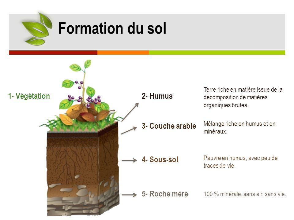 1- Végétation2- Humus 4- Sous-sol 3- Couche arable 5- Roche mère Terre riche en matière issue de la décomposition de matières organiques brutes. Mélan