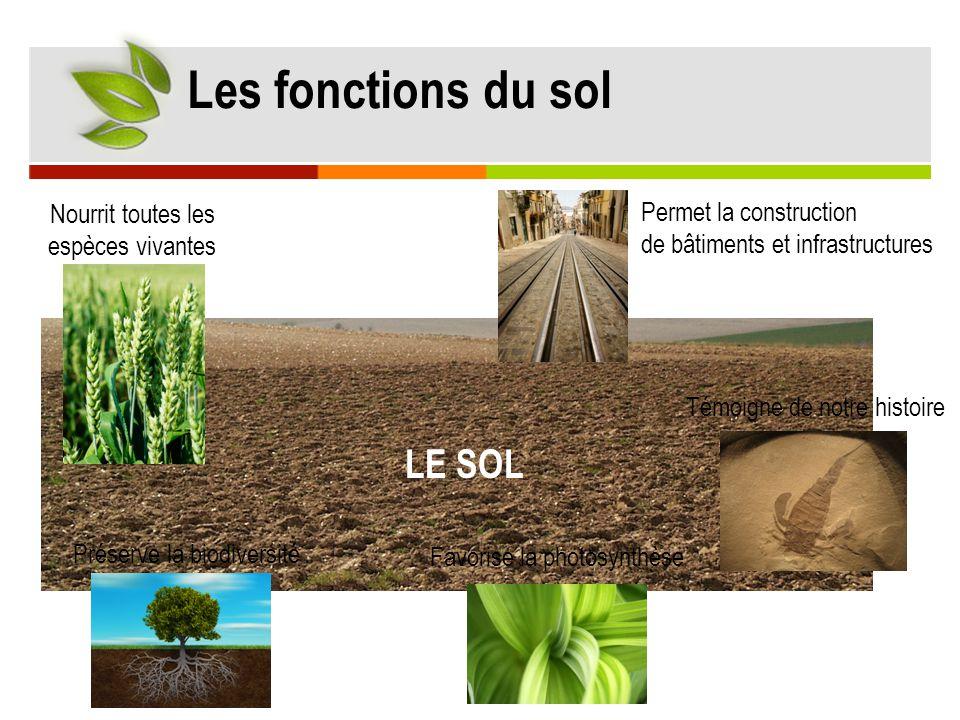 Les fonctions du sol Préserve la biodiversité Favorise la photosynthèse Permet la construction de bâtiments et infrastructures Témoigne de notre histo