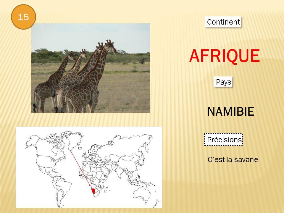 15 Continent AFRIQUE Pays NAMIBIE Précisions Cest la savane