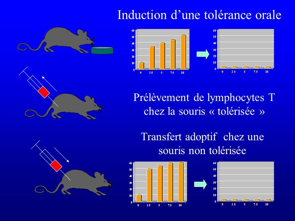 Induction dune tolérance orale Prélèvement de lymphocytes T chez la souris « tolérisée » Transfert adoptif chez une souris non tolérisée