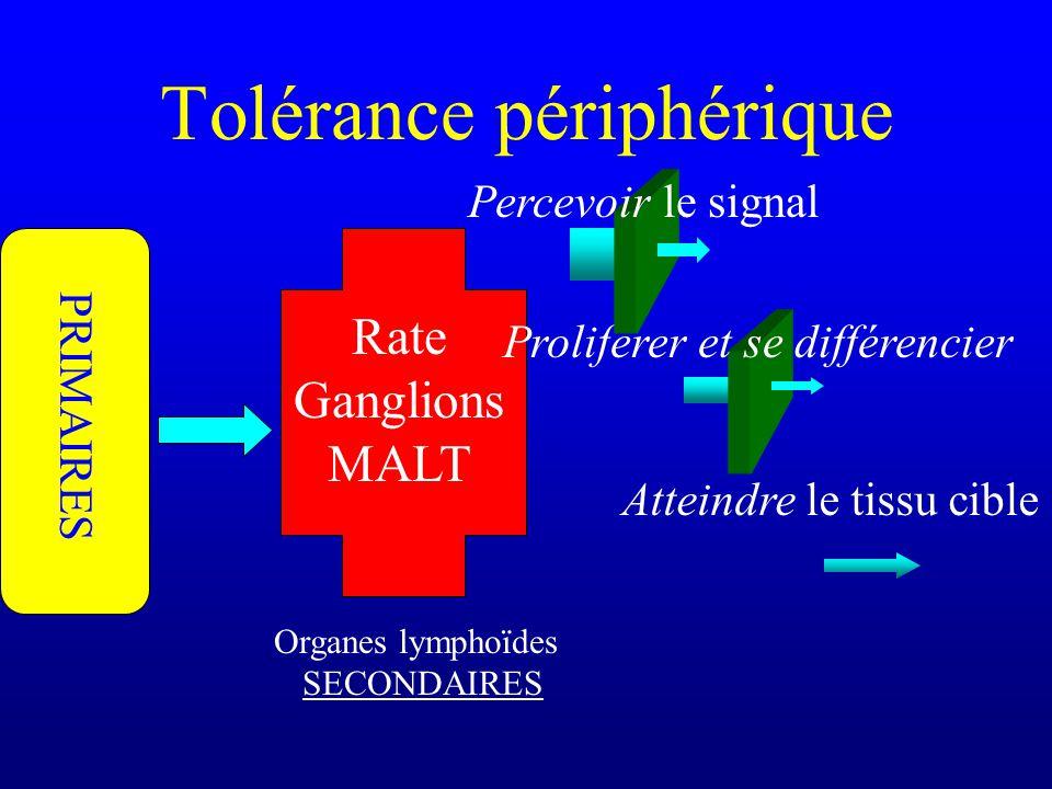 Tolérance périphérique Organes lymphoïdes SECONDAIRES Rate Ganglions MALT Atteindre le tissu cible PRIMAIRES Proliférer et se différencier Percevoir l