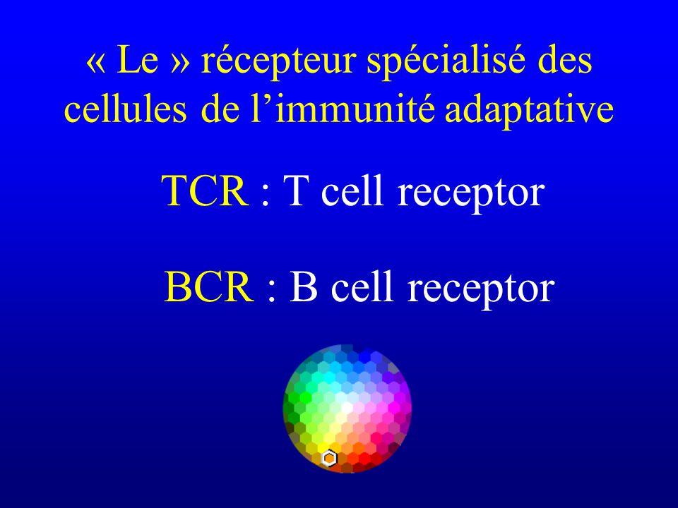 TCR : T cell receptor BCR : B cell receptor « Le » récepteur spécialisé des cellules de limmunité adaptative